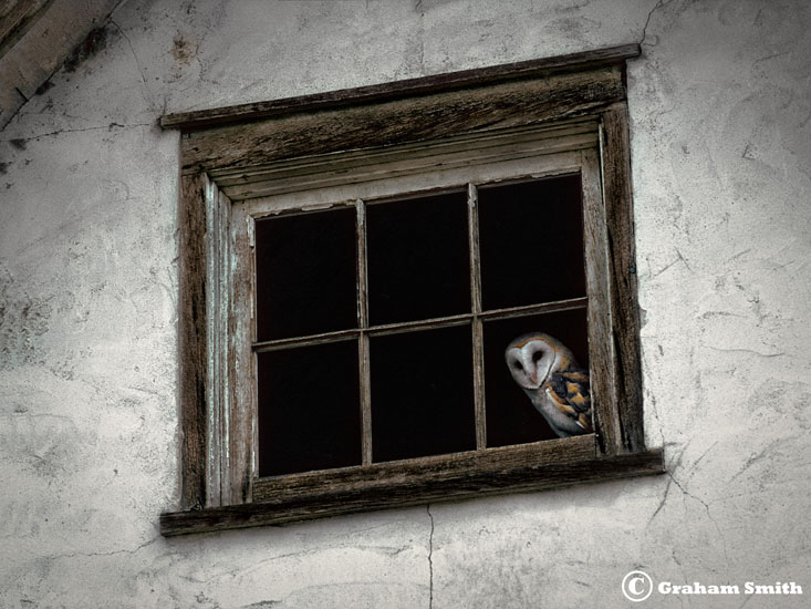 Owl_Barn_Window_12x16