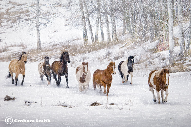 Horses_Sno_Charge1