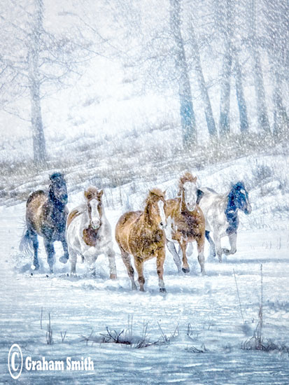 Horses_Sno_Charge2v