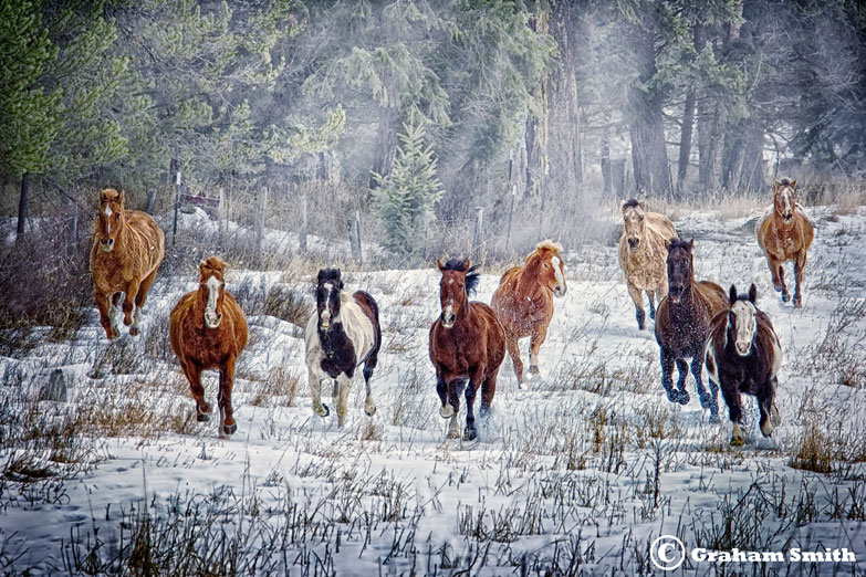 Horses_Sno_Charge4
