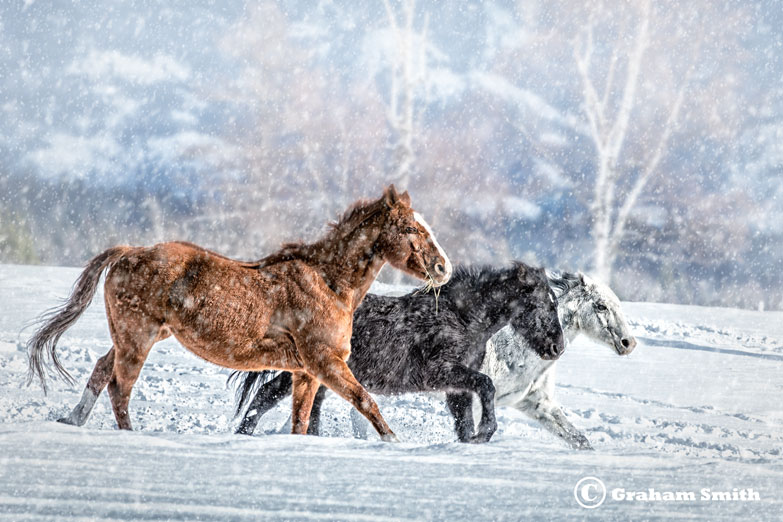 Horses_Three_Snow1