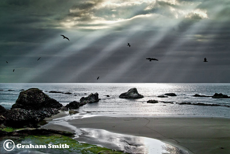 Sunstreaks_Gulls