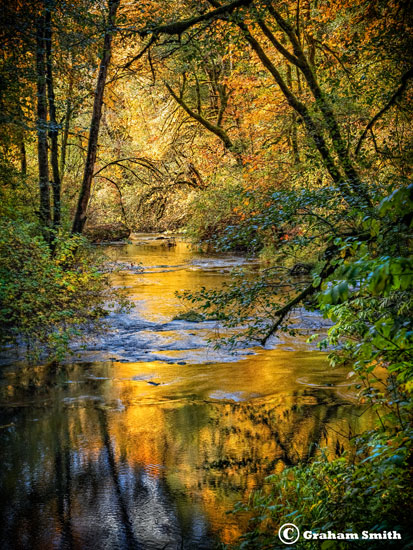 Alderwood_Creek1