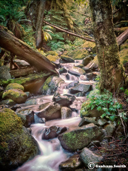 RainForrest_Stream