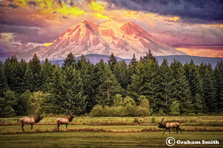 Rainier_Sunset_Elk